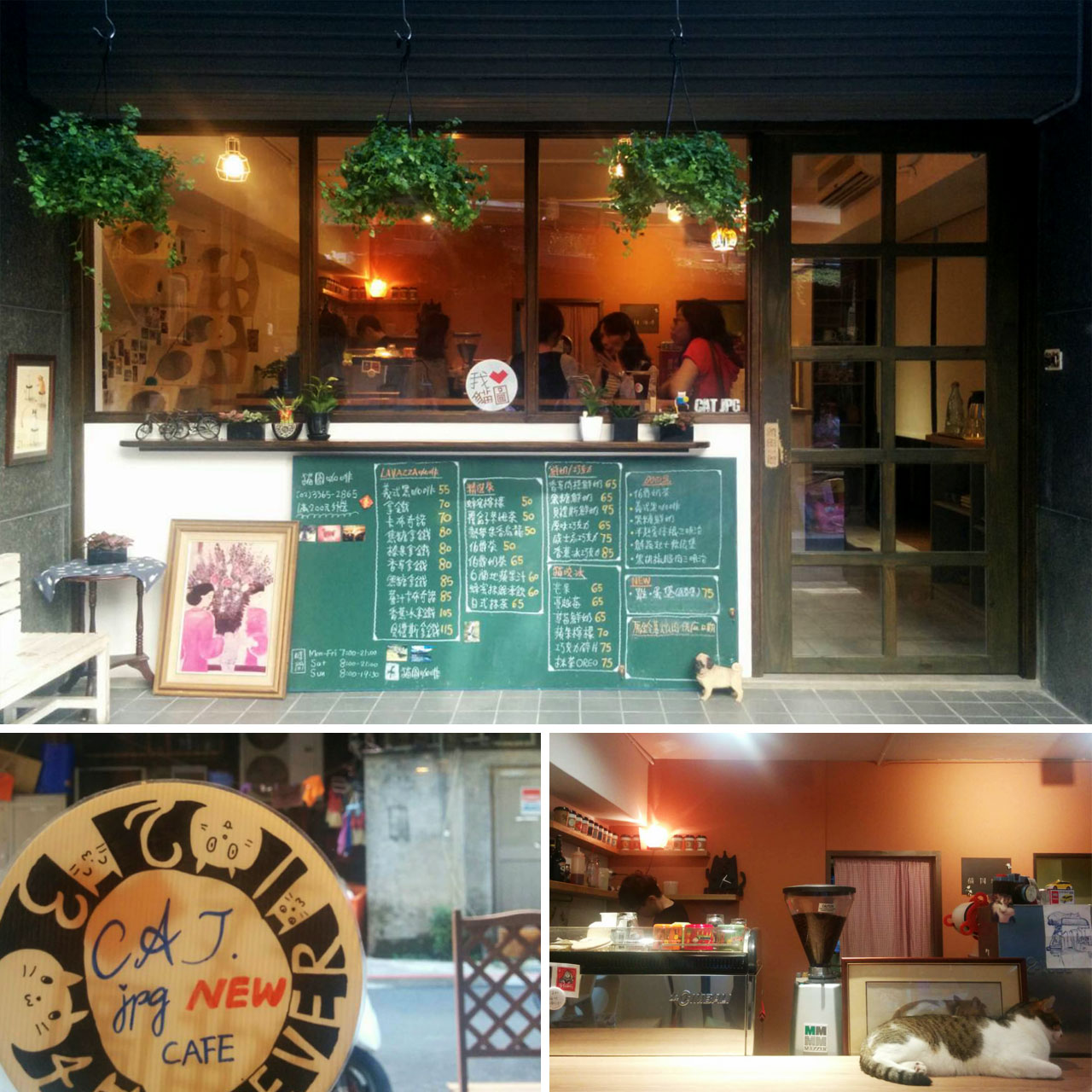 Photos of the new Cat.jpg Cafe