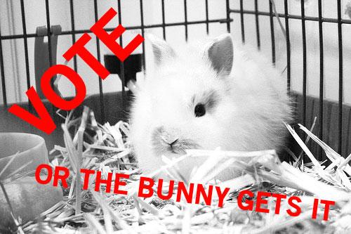 tgwae-bunny.jpg